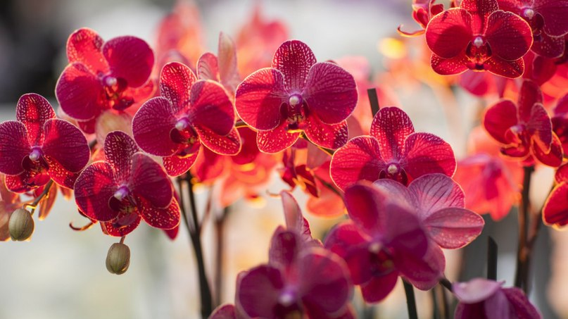 Сексуальные цветы