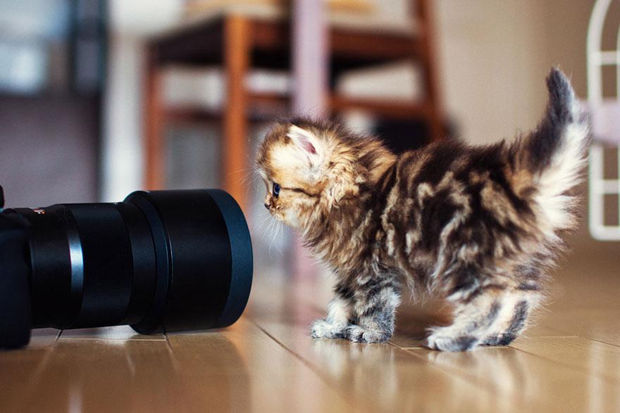 Самые красивые котята в мире картинки